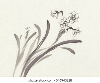 Narcissus in bloom. Ink painted narcissus flowers over white. Blossom collection. Hand drawn illustration.
