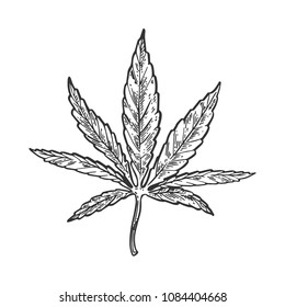 Narcotic cannabis leaf engraving raster illustration. Scratch board style imitation. Black and white hand drawn image.