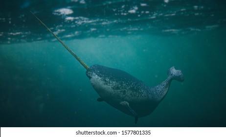 Narwhal, male Monodon monoceros swimming in the ocean (3d rendering)