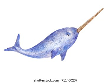 narwhal watercolor illustration isolated on white