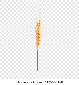 Natural wheat icon. Realistic illustration of natural wheat icon for on transparent background