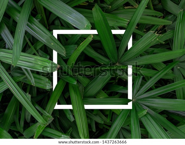 nature-concept-square-frames-creative-60