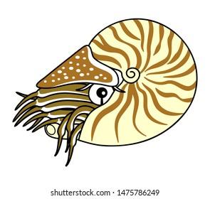 Nautilus Deep Sea Fish Character Illustration Clip art cartoon