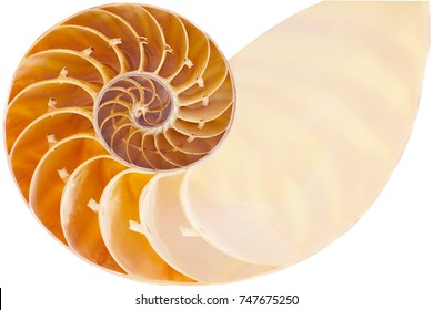 Nautilus shell section isolated white background, This has clipping path  .