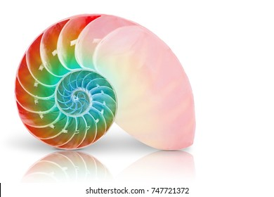 Nautilus shell section isolated white background, This has clipping path