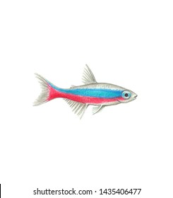 Neon tetra fish illustration realistic drawing by colored pencils bright neon fish zoological illustration isolated on white background