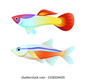 Neon tetra and guppy fish informative poster. Aquarium specie appearance colorful flat raster illustration isolated on white for nautical journal.