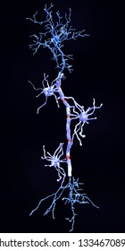 Neuron with myelin sheaths produced by oligodendrocytes. They insulate the axon. This insulation increases the rate of transmission of signals, which spring from gap to gap. 3d rendering