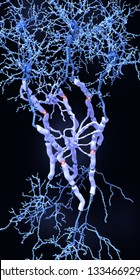 Neurons with myelin sheaths produced by oligodendrocytes. They insulate the axon from electrical activity increasing the rate of transmission of signals, which spring from gap to gap. 3d rendering
