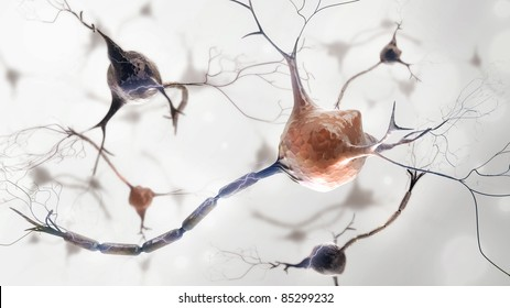 neurons and nervous system. 3d render of organic nerve cells