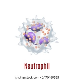 Neutrophil. Blood Cell in Realistic Style for for Medical Center and Laboratory Fliers Banners Posters Ad Web Pages. Illustration
