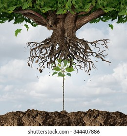 New leadership takeover or taking over concept or development and renewal business symbol  as an emerging young sapling pushing out an older more established tree as a success start up metaphor.
