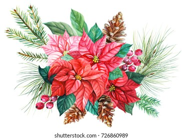 New year tree branch with poinsettia and cones for design, print or background. Watercolor hand painted christmas flower