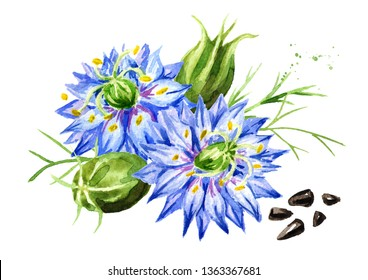 Nigella sativa or fennel flower, nutmeg flower, Roman coriander, black cumin, black sesame, blackseed, black caraway,  Bunium persicum. Watercolor hand drawn illustration, isolated on white background