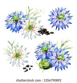 Nigella sativa or fennel flower, Roman coriander, black cumin, black sesame, blackseed, black caraway set,  Bunium persicum. Watercolor hand drawn illustration, isolated on white background