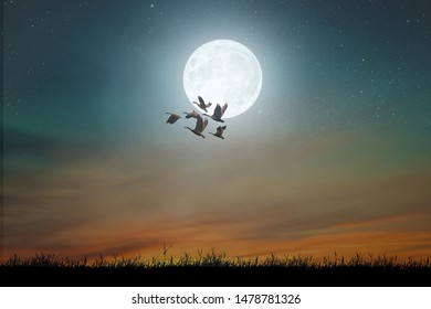 Night moon landscape with flying geese and endless starry sky.