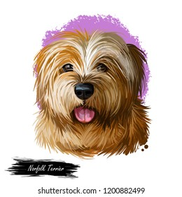 Norfolk terrier, watercolor portrait of canis lupus familiaris, digital art. Dog originated from Great Britain, England origin. Hound sticking out tongue, poster with text and mammal purebred