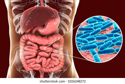 Normal flora of small intestine, bacteria Lactobacillus, 3D illustration. Lactic acid bacteria. Probiotic bacterium