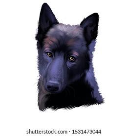 Norsk Elghund Svart Black Norwegian Elkhound, dog digital art illustration isolated on white background. Norwegian origin hunting dog. Cute pet hand drawn portrait. Graphic clip art design