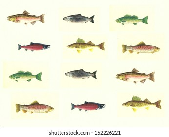 North American Freshwater Fish Background