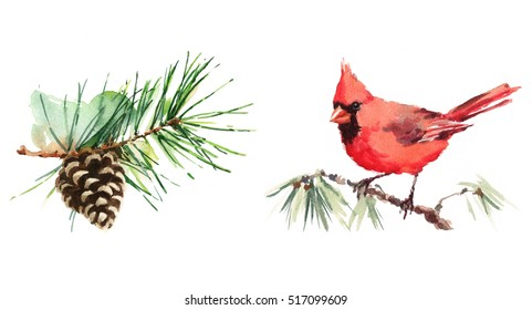 Northern Cardinal on the Branch and Pine Cone Watercolor Hand Painted Greeting Card Winter Christmas Illustration Set isolated on white background