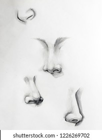 nose sketch anatomy symbol, body, nostril, drawing