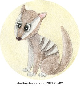 Numbat cartoon hand drawn illustration. Watercolor and pencils art