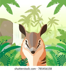 Numbat on the Jungle Background