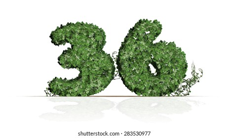 Number 36 from green ivy leaves - isolated on white background