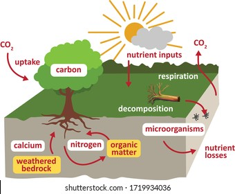 Nutrient cycling soil carbon cycle ecosystem abiotic component - Snar