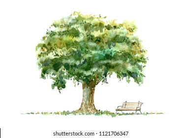 Oak and bench.Deciduous tree. Watercolor hand drawn illustration.White background.