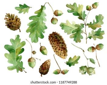 oak leaves and acorns watercolor set.