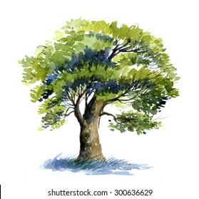 Oak tree watercolor