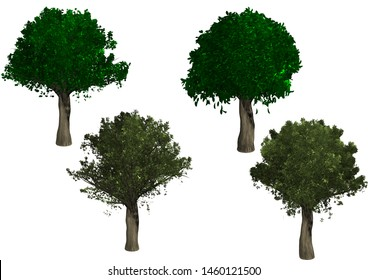 Object of trees on a white background/ Rendering object of tree