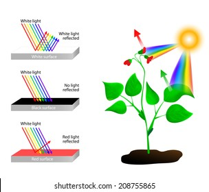 Objects look coloured because they reflect or absorb the different colours in white light. white it reflects all the wavelengths. A black absorbs all  wavelengths of light and reflects none.