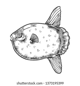 Ocean sunfish animal sketch engraving raster illustration. Scratch board style imitation. Black and white hand drawn image.