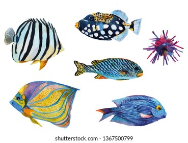 Oceanic creature watercolor set illustration. Underwater hand painted multicolored coral fishes.