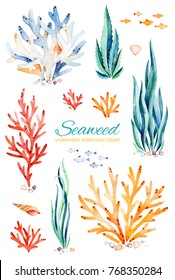 Oceanic seaweed watercolor set. Underwater hand painted multicolored coral reefs,seashells and fishes.Perfect for invitations,party decorations,printable,craft project,greeting cards,blogs,stickers et