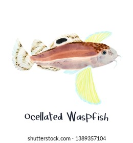 Ocellated Waspfish realistic animal illustration