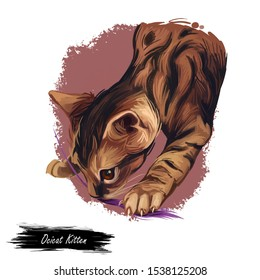 Ocicat kitten digital art illustration. Feline breed named after Ocelot, kitty playing with thread. Domesticated pet, originated from USA. American cat watercolor realistic portrait closeup with text