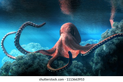An octopus with an almost red and pink marbled skin moves among brown coral in an ocean shallow. The creatures tentacles whip around as it scuttles through the aquatic landscape.