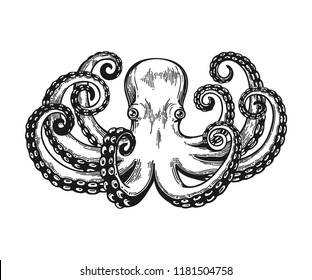 Octopus engraving. Vintage black engraving illustration. Retro style card. Isolated on white background. illustration