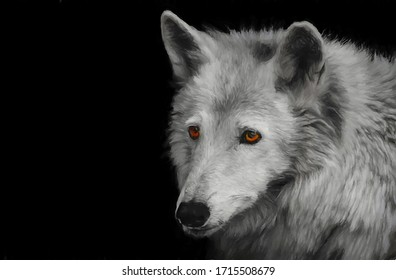 Oil painting wolf on a black background with orange eyes