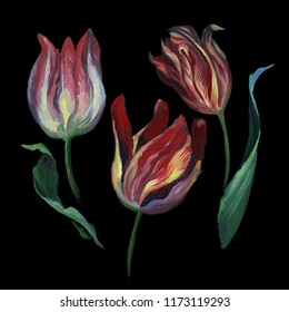 Oil or pastel drawing. Set of rose tulip and leaf on black background. Flowers drawing in old style