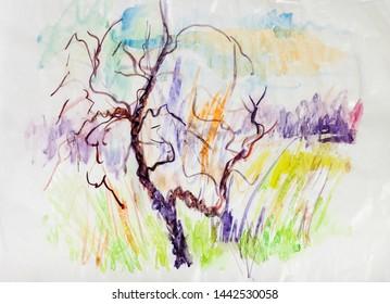 old tre in spring near field