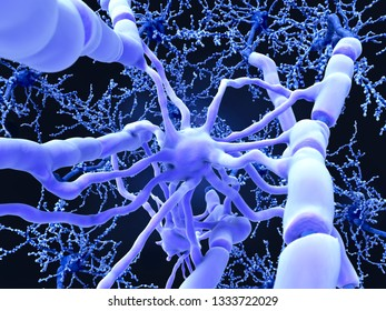 Oligodendrocyte forms insulating myelin sheaths around neuron axons in the central nervous system. Myelin increases the impulse speed and decreases the capacitance of the axon membrane. 3d rendering