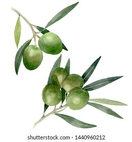 Olive branch with black and green fruit. Watercolor background illustration set. Watercolour drawing fashion aquarelle isolated. Isolated olives illustration element.