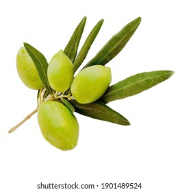 Olive branch with fruits. Oil painting imitation. 3D illustration.