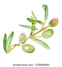 olive branch isolated watercolor illustration by hand