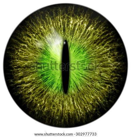 o live green cat crocodile reptile eyeのイラスト素材 302977733
